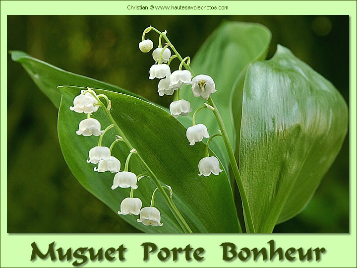 porte bonheur muguet. Black Bedroom Furniture Sets. Home Design Ideas