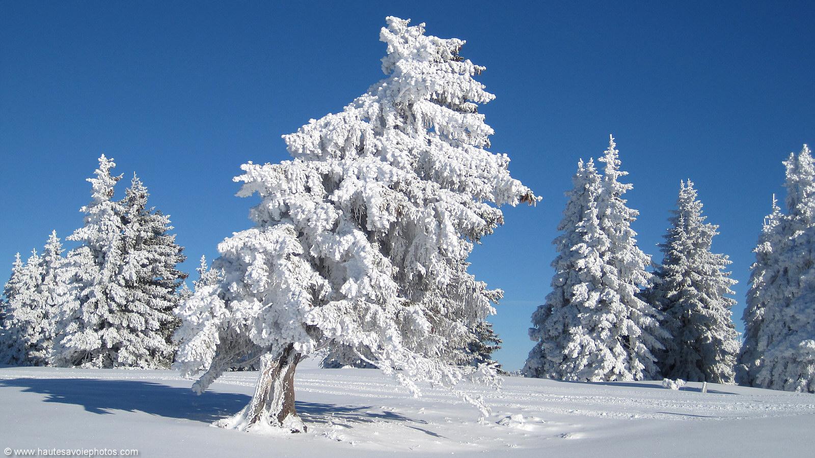 Fond D'écran En 1600x900 D'un Paysage Avec Des Sapins Sous La Neige à -12°c En Décembre 2010 Au